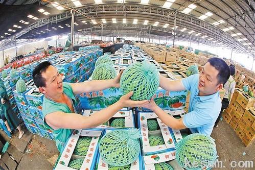香满园电商平台的货源直接从菜园坝市场进行配送,保证了货品新鲜、配送及时。